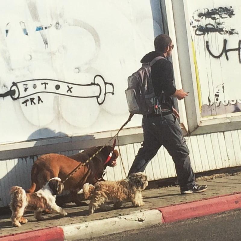 Pet-sitter à Tel-Aviv un job qui fait fureur à pied ou à vélo