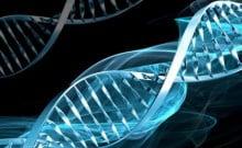 Création d'une base génétique des citoyens israéliens