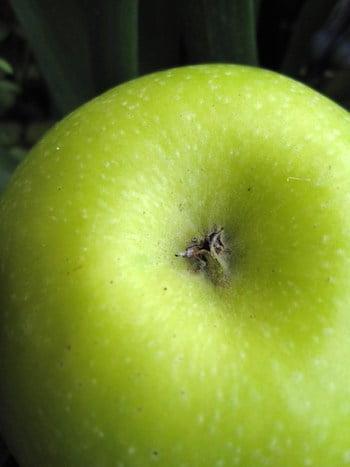 magret de canard aux pommes granit