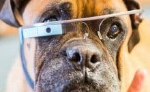Des lunettes pour chien