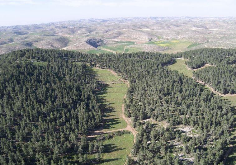 foret de Yatir dans le Neguev