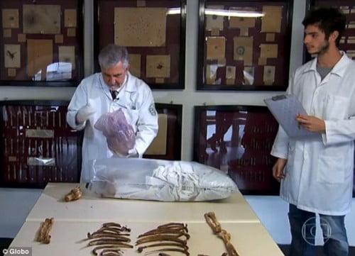 Le Dr Daniel Romero Muniz examine les ossements de Mengele