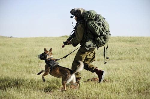 Il s'était engagé dans l'unité canine