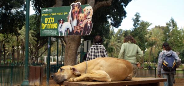 Tel Aviv, la ville qui a du chien