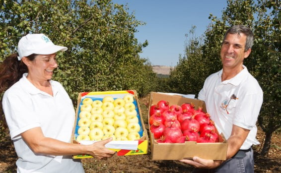 Israël: 5 nouvelles variétés de pommes pour les fêtes