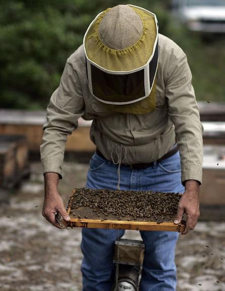 Israël: Pour chaque kilo de miel vendu, les apiculteurs font un bénéfice de 2 shekel