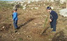 Israël: des arbres aux racines magistrales