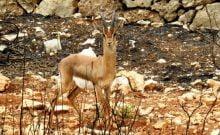Israël: des alertes Waze pour protéger les animaux sauvages sur les routes