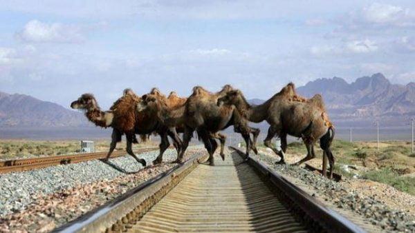 Sauver les milliers d'animaux sauvages qui se font percuter chaque année sur les routes