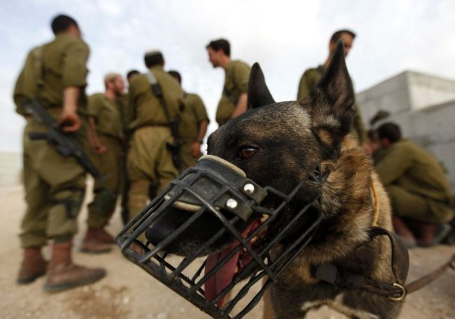 Israël: une maison de retraite pour nos héros à quatre pattes