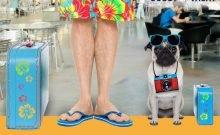 Un voyage offert en Israël pour les chiens stars des réseaux sociaux