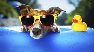 Les chiens stars des réseaux sociaux