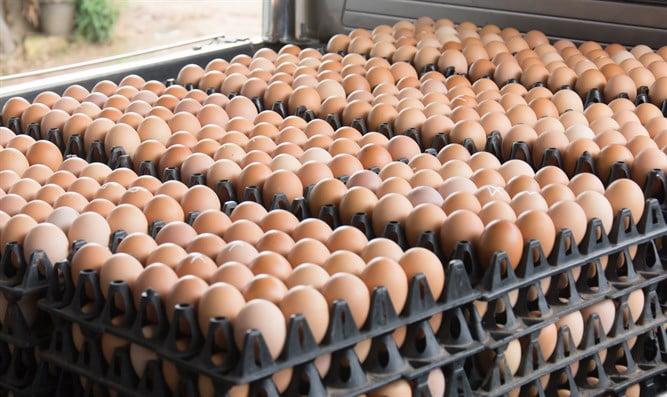 Israël: 4 500 œufs pourris ont bien pu être vendus dans votre supermarché