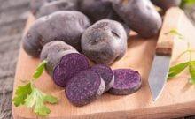 Israël: un gratin de pommes de terre violettes, ça vous branche?