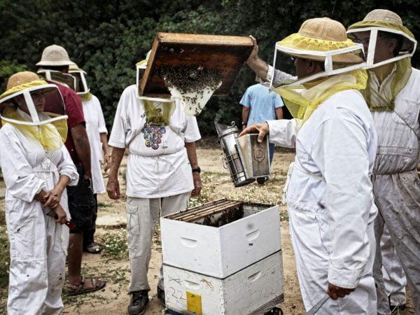 Israël importera 560 tonnes de miel sans taxe pour la nouvelle année juive