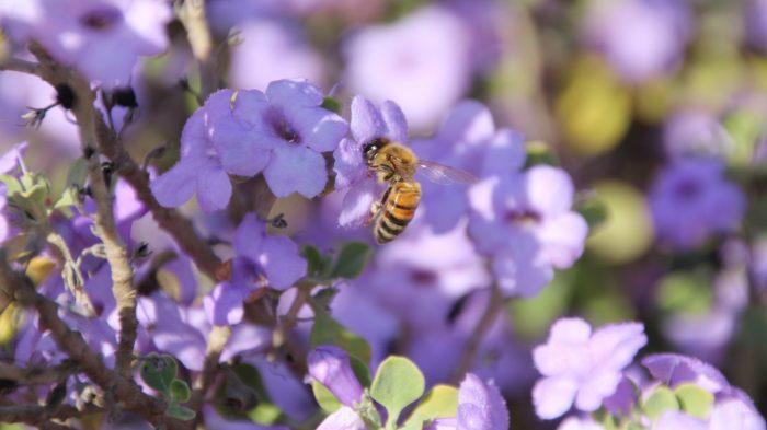 Une recherche israélienne unique révèle pourquoi les abeilles meurent