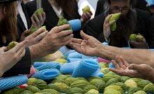 Israël: ces magnifiques images captent la beauté de Souccot