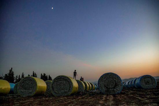Les champs de coton, après la récolte