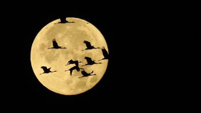 Israël: une histoire d'oiseaux migrateurs et de super lune