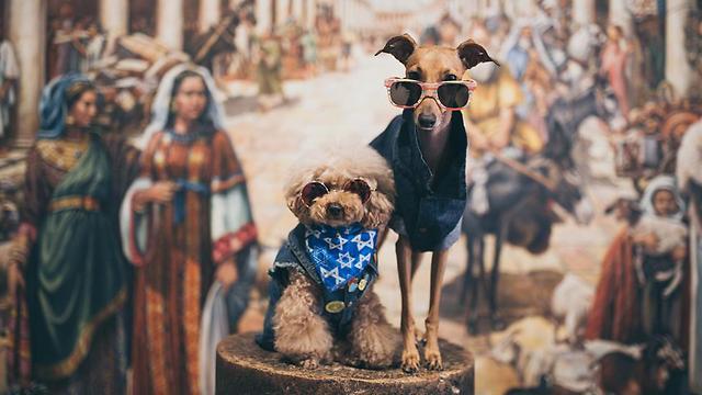 Des célébrités canines américaines visitent la Terre Sainte