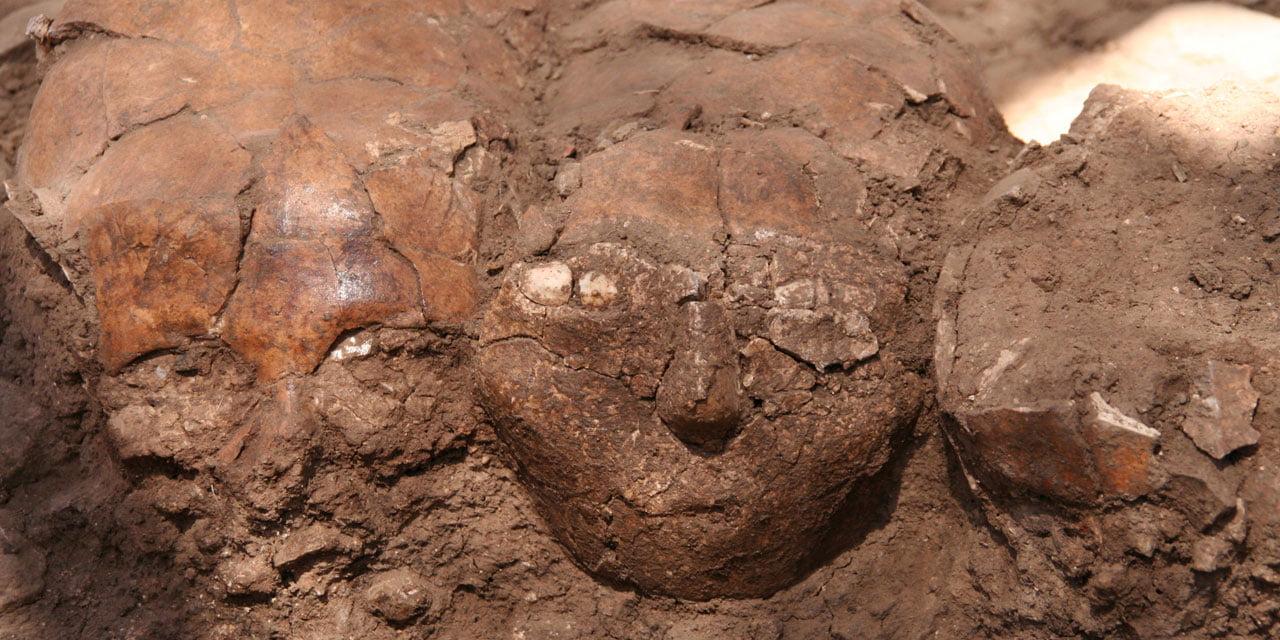 Israël: découverte d'un important site préhistorique près d'une autoroute