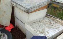 Israël: la police pique deux arabes piqués par des abeilles qu'ils avaient piquées