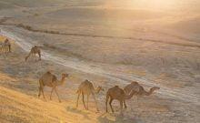 Des photographies à couper le souffle du désert israélien