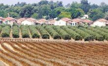 Israël: un kibboutz distribue 150 millions de shekel à ses membres