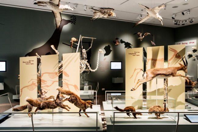 Le premier musée d'histoire naturelle ouvre en Israël