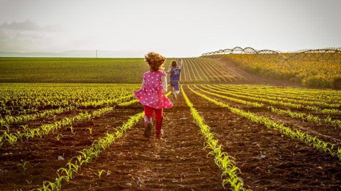 Israël: une incroyable abondance de fruits et de légumes gorgés de soleil