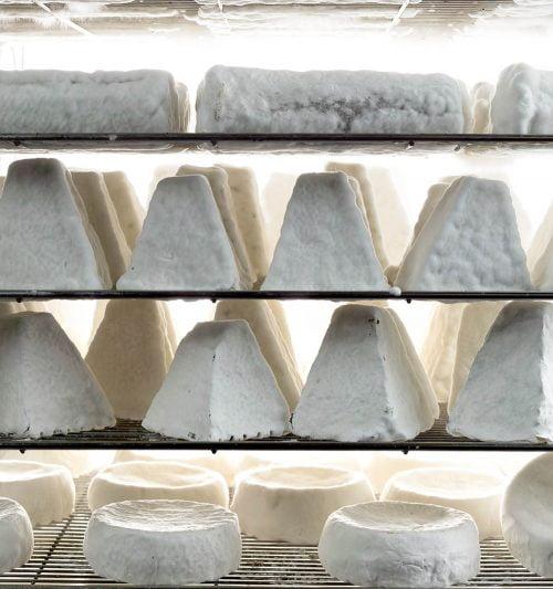 Fromages de chèvre de la ferme Har Eitan de Shai Seltzer. Photo par Vision StudioVision Studio