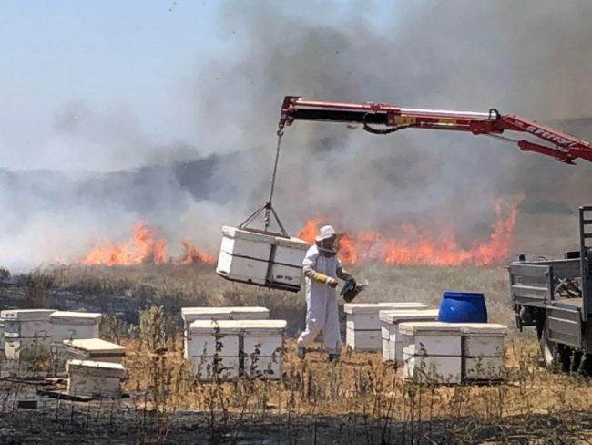 Les bombes incendiaires de Gaza mettent le miel israélien en danger