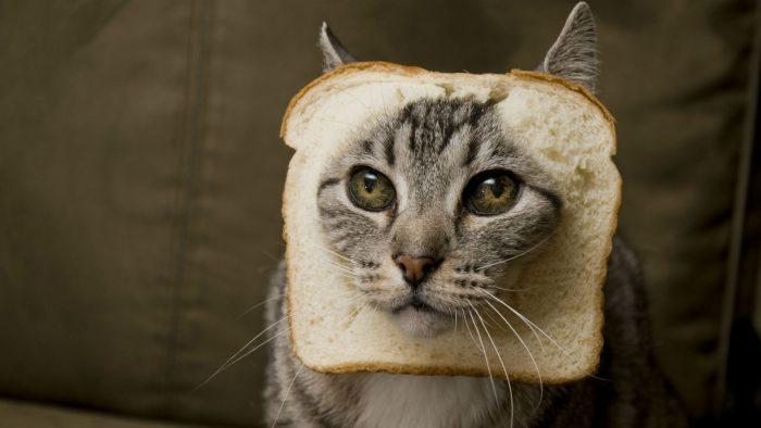 Six noms de chats inspirés de la cuisine juive