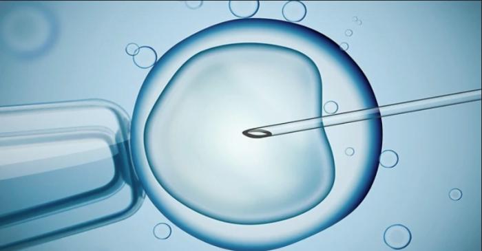 7000 bébés-éprouvette naissent chaque année en Israël
