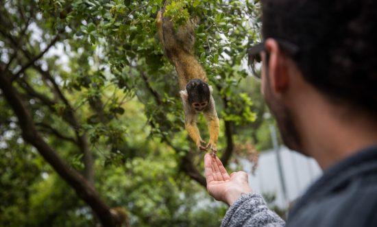 Les visiteurs nourrissent les singes de la forêt des singes à Yodfat. Photo par Hadas Parush / FLASH90