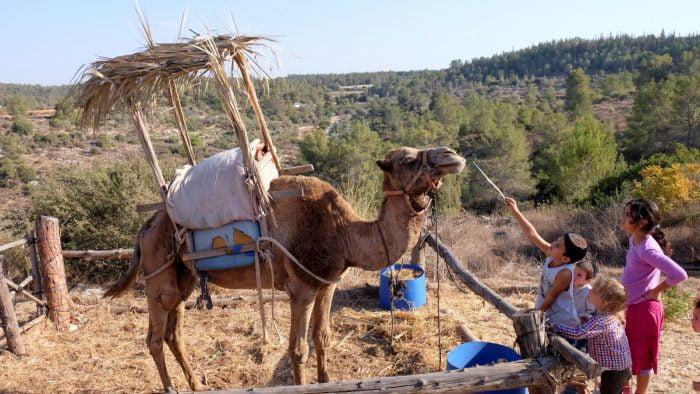 Israël: peut-on construire une soucca sur un bateau ou sur un chameau?