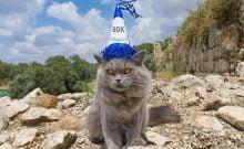 Serge, le chat israélien qui fait fureur sur les réseaux sociaux