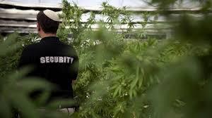 En Israel conduire sous cannabis c'est permis