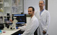 Les Israéliens découvrent un traitement prometteur pour les tumeurs cérébrales agressives