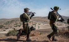 Israël: l'unité canine de Tsahal se prépare elle aussi à la guerre