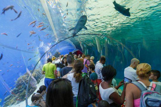 Le réservoir de requins à l'observatoire sous-marin d'Eilat. Photo Shutterstock