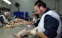 JERUSALEM - MARCH 20:  Orthodox Jewish rabbis clean slaughtered chickens at the Jerusalem Chicken Factory March 20, 2006 in Jerusalem, Israel. Chickens are processed to make sure they are Kosher according to Jewish dietary laws. According to Israeli media, Bird Flu threatens about 40% of Israel's poultry sector if the Avian Flu continues to depress sales.