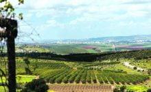 Au plus froid de l'hiver israélien, la saison idéale pour visiter la vallée de Jezreel