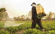 Truffés de pesticides, les fruits et légumes israéliens menacent de nous tuer