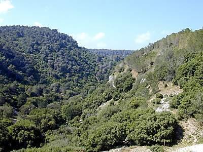 La forêt du Carmel, Israël