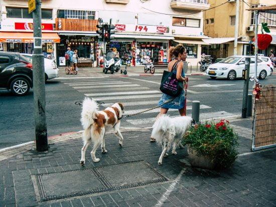Une femme promenant des chiens à Tel-Aviv.