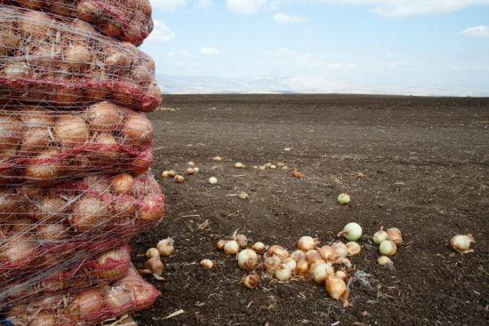Les kibboutzim, des agglomérations typiquement agraires, produisent 40% de la production agricole d'Israël © Ryan Rodrick Beiler / Alamy Banque d'images