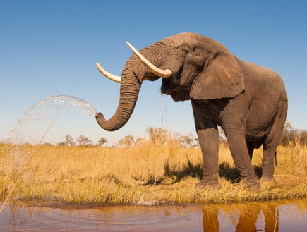 La chasse illégale en Afrique est devenue une attraction populaire Photo: Donovan van Staden, ShutterStock