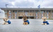 Les chiens et leurs propriétaires sont maudits selon des rabbins d'une ville en Israël