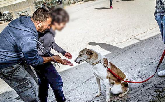 Israël : quand le dressage de chiens devient une thérapie pour les jeunes